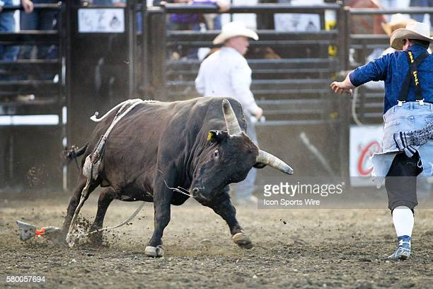 PRCA Pro bull Real Mamba runs wild through the arena during the Extreme Bulls competition at the Kitsap County Stampede in Bremerton Washington