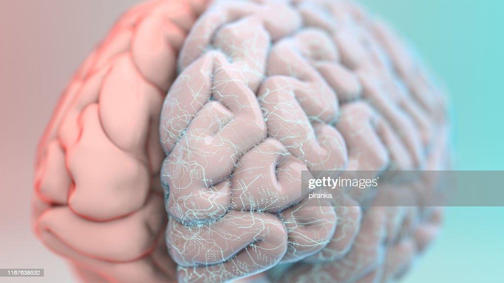 Augmented brain : Stock Photo