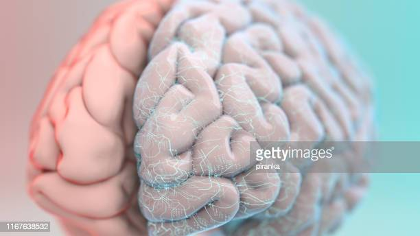 augmented brain - cerebrum stock pictures, royalty-free photos & images