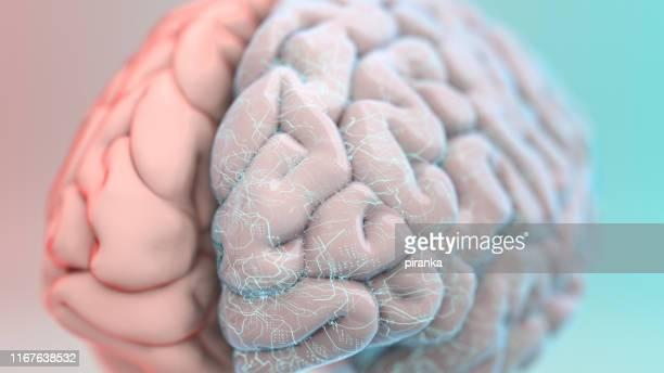 cerebro aumentado - cerebro humano fotografías e imágenes de stock