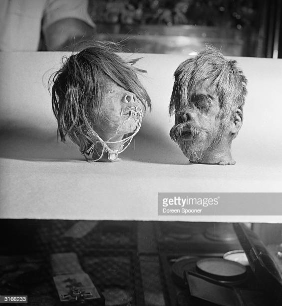 Two shrunken heads from the South American Jivaros tribe The heads go through a tanning process and are baked to preserve them