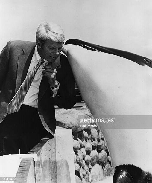 Peter Graves star of the popular TV series 'Mission Impossible' with Shamu the killer whale at Sea World in California