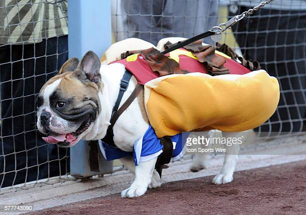 Dogs and their owners walk on the warning track around the field for the Pups in the Park promotional event prior to a Major League Baseball game...