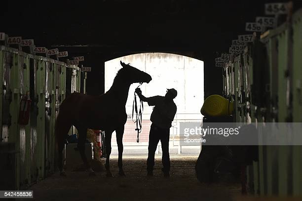 5 August 2015 Horse and handler in the stables during the Discover Ireland Dublin Horse Show 2015 RDS Ballsbridge Dublin Picture credit Cody Glenn /...