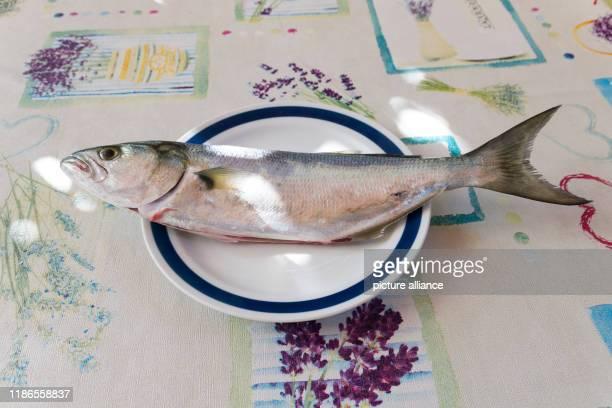 August 2018, Croatia, Rovinj: A blue bass, called Bluefish in Krotaien, lies on a plate. A full-grown blue bass can weigh up to eight kilos. Photo:...