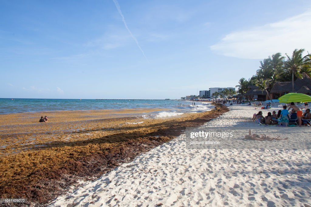 Brown Algae Are Found In Front Of And