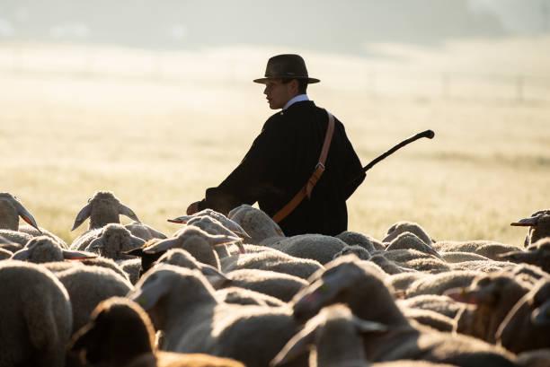 DEU: Shepherd Run