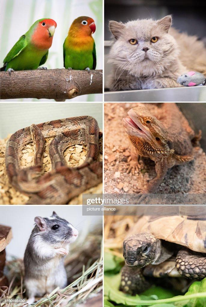 High activity in the Hamburg animal shelter : News Photo