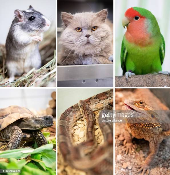 The picture combo shows from top left to bottom right Mongolian gerbil Gerda British longhaired highlander cat Connery roseheaded parakeet Rosario...