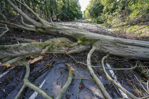 DEU: Storm Damage In Germany