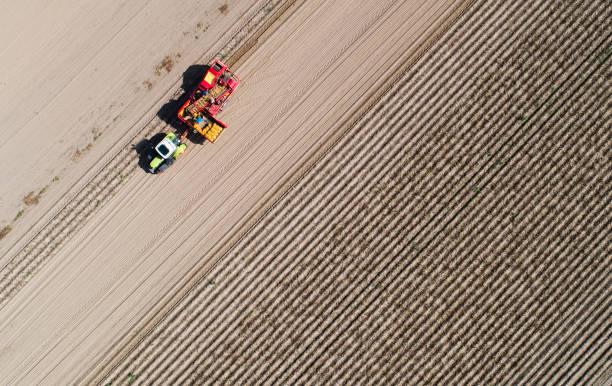 DEU: Potato Harvest In Lower Saxony