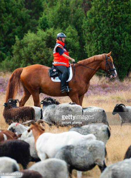 August 2019, Lower Saxony, Niederhaverbeck: Martina Leffrang is the ambulance rider of the Johanniter-Unfall-Hilfe at a press event in the Lüneburger...