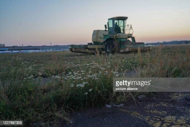 August 2020, Berlin: The 120 hectare extensive meadow area on the Tempelhofer Feld is mowed in the morning. The right time for mowing the meadows has...