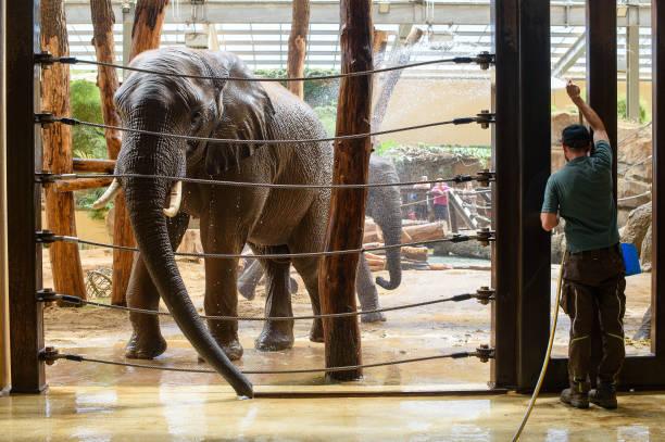 DEU: Elephant Shower At Magdeburg Zoo
