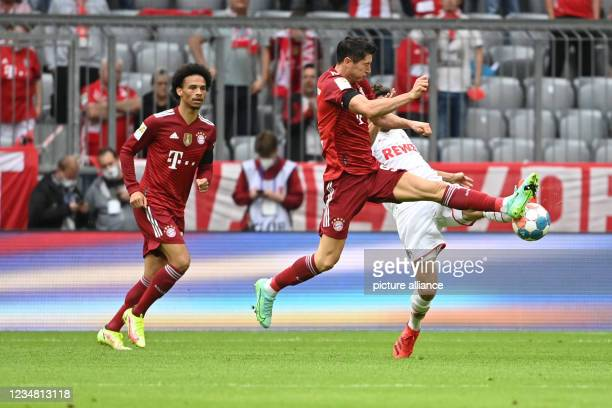 August 2021, Bavaria, Munich: Football: Bundesliga, Bayern Munich - 1. FC Köln, Matchday 2, Allianz Arena. Bayern's Robert Lewandowski in action...