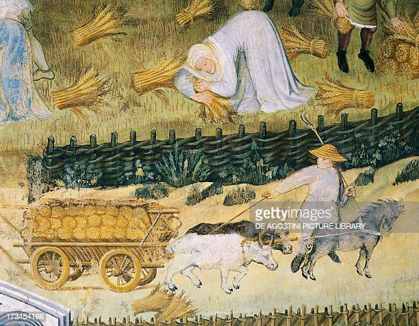 August panel from the Cycle of the Months by the Master Wenceslas of Bohemia fresco Torre Aquila Buonconsiglio Castle Trento TrentinoAlto Adige...