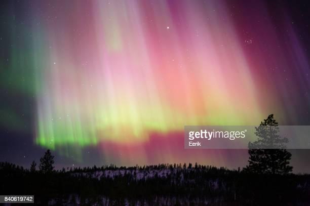 Aurora Borealis boven boreale bossen