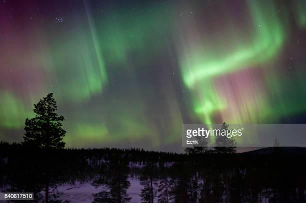 Aurora Borealis above wilderness