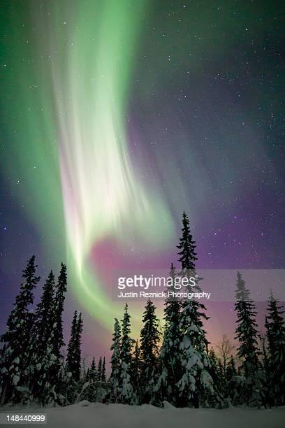 Aurora borealis and snow covered trees