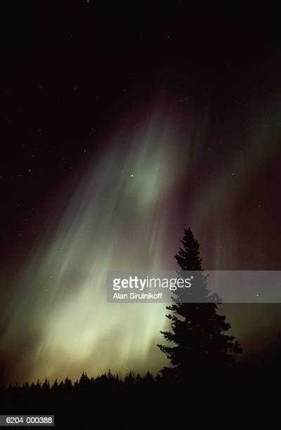 aurora borealis and tree - sirulnikoff stock pictures, royalty-free photos & images