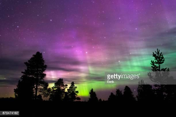 Norrsken, Northern Lights, ovanför boreala skogen