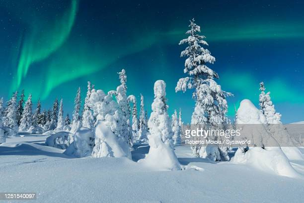aurora borealis on icy trees, lapland, finland - dramatic sky stock pictures, royalty-free photos & images