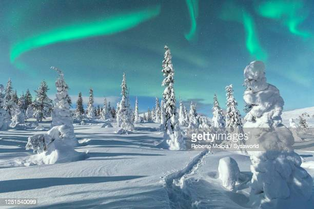 aurora borealis on icy trees, lapland, finland - finland stock pictures, royalty-free photos & images