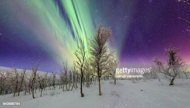 aurora borealis or northern lights, sweden - swedish lapland stock photos and pictures