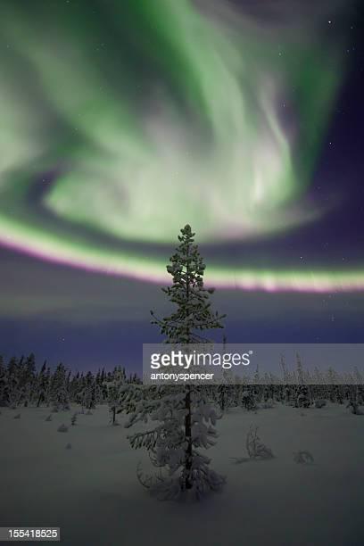 Aurora Borealis over a frozen forest
