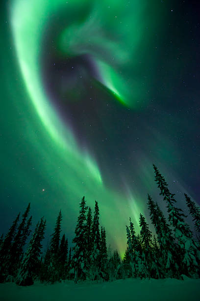 Aurora Borealis Over A Frozen Forest Wall Art