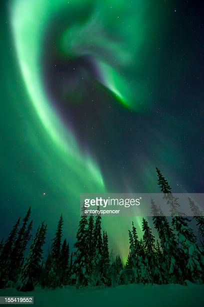 aurora borealis over a frozen forest - swedish lapland stock photos and pictures