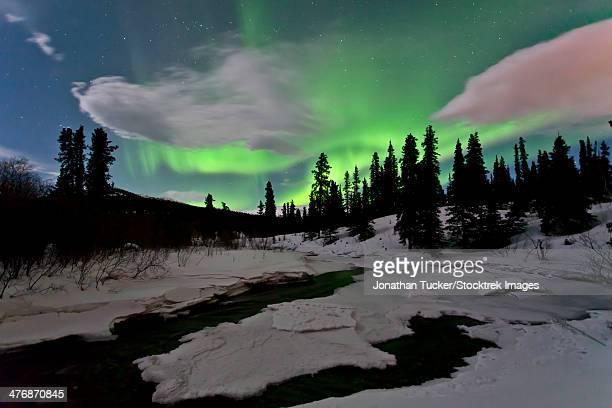 Aurora borealis over creek, Yukon, Canada.