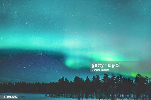 aurora borealis over forest - sweden stock pictures, royalty-free photos & images