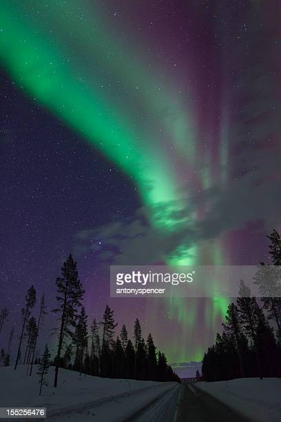 Aurora Borealis over pine trees in Arctic Sweden