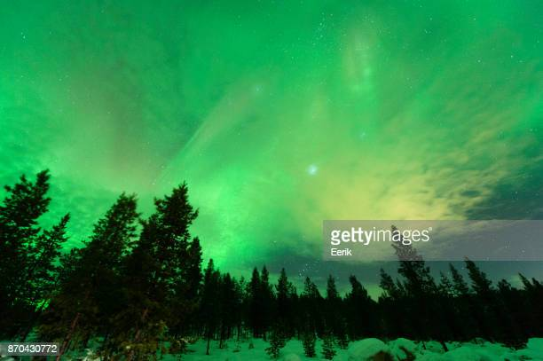 Aurora Borealis, planet Jupiter and The Pleiades above boreal forest.