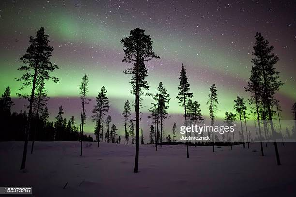 Aurora Borealis Stripes over Trees