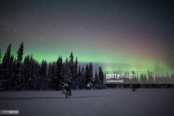 Aurora Borealis Winter Forest