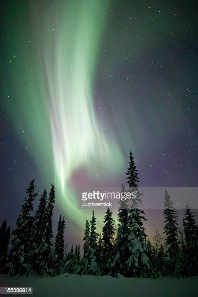 aurora borealis winter scene - swedish lapland stock photos and pictures