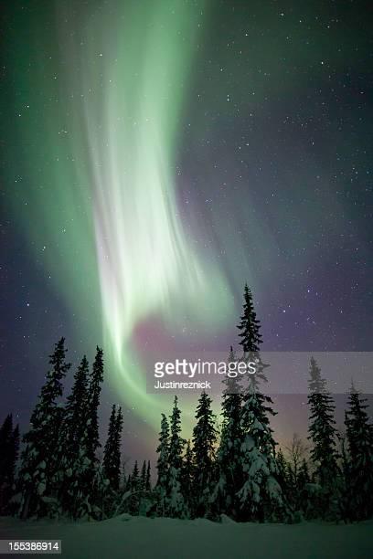 Aurora Borealis Winter Scene