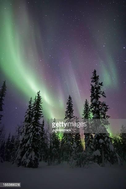 Aurora Borealis に雪&の木