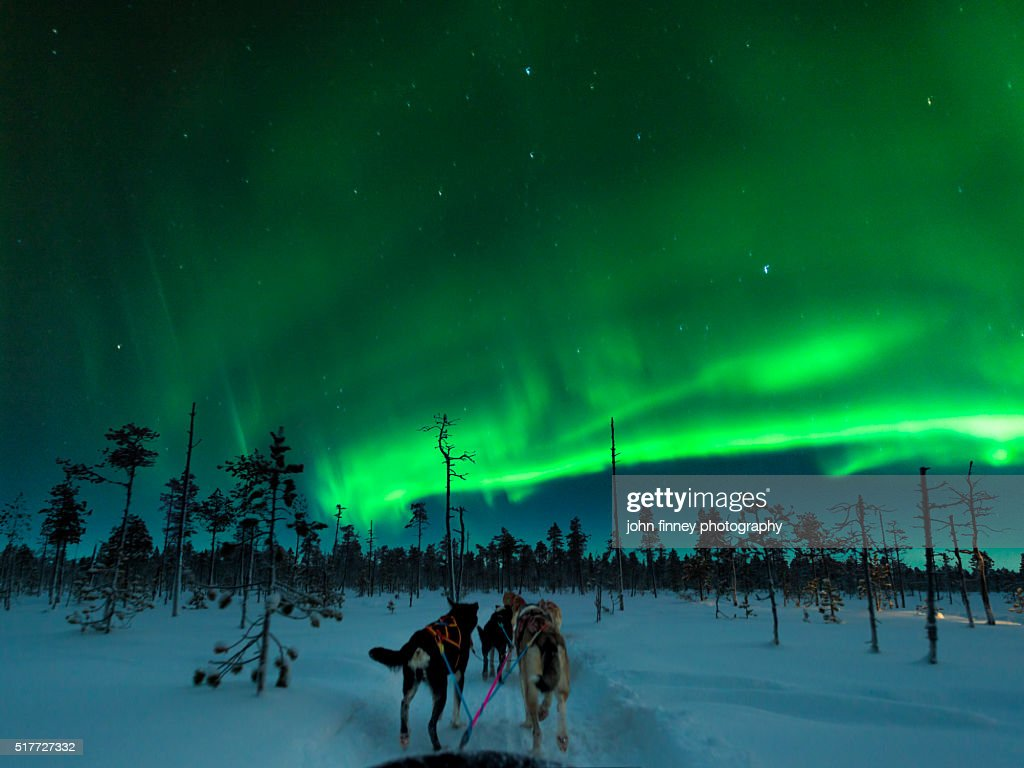 Aurora Dog Sledding, Finland. : Stock Photo