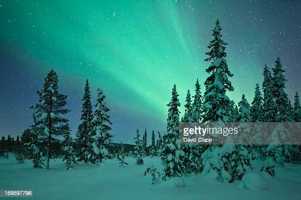 aurora in a frozen forest in  kiruna, sweden - swedish lapland stock photos and pictures