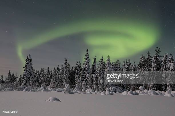 Aurora over a frozen forest near Kiruna