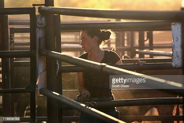 Aurora Sikes helps to move cattle into pens after they had been sold at the Abilene Livestock Auction July 26 2011 in Abilene Texas A severe drought...