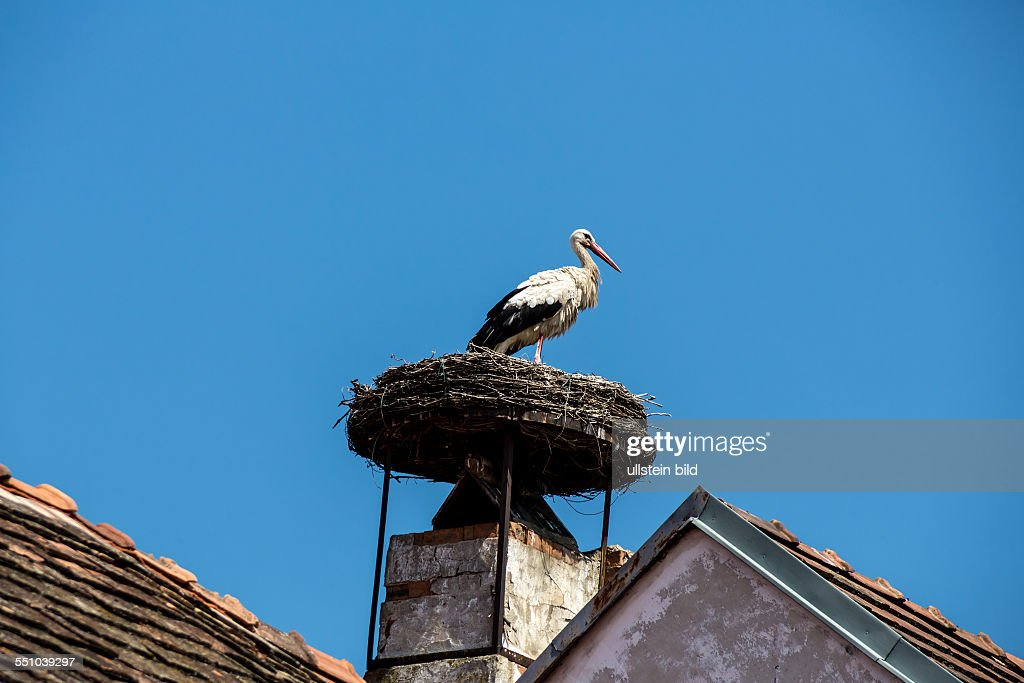 Rust neusiedlersee störche  Storch auf einem Haus in Rust Pictures | Getty Images