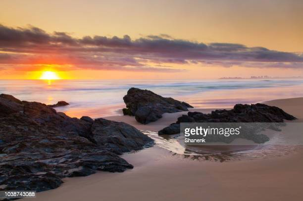 australia, gold coast - the natural world stock pictures, royalty-free photos & images