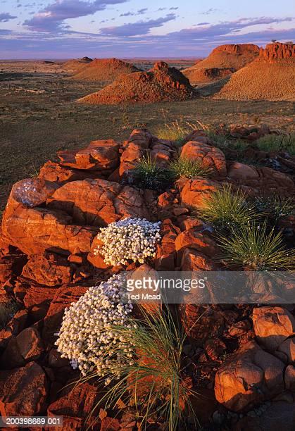 australia, great sandy desert, rudall river np, sunset - great sandy desert fotografías e imágenes de stock