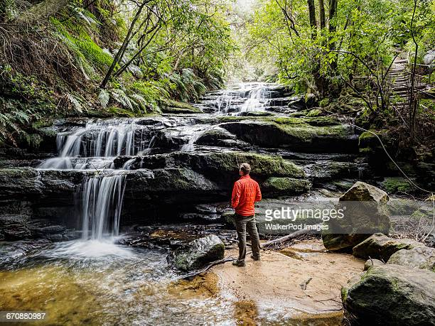 australia, new south wales, blue mountains national park, leura cascades, young man standing by waterfall in forest - katoomba stock pictures, royalty-free photos & images