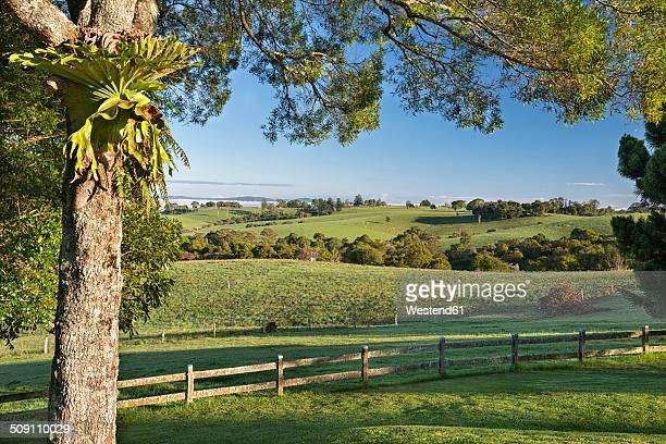 Australia, New South Wales, Dorrigo, landscape in the morning light