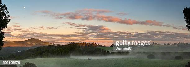 Australia, New South Wales, Dorrigo, meadows in Dorrigo National Park at dawn